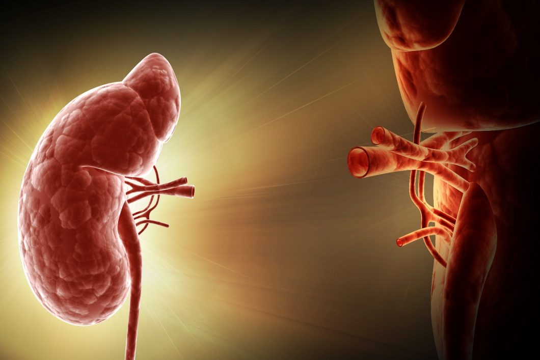 Kidney Transplant, Conservative Care, or Dialysis How to Know Which Treatment Plan is Right for You